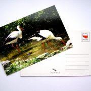 pocztówka - bociany polskie