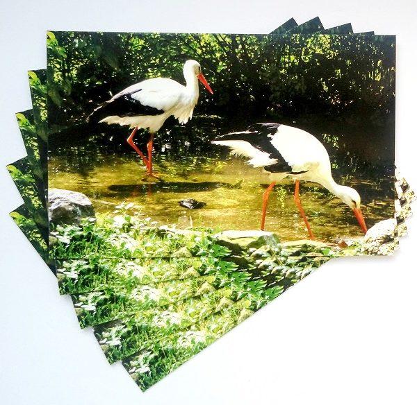 pocztówka polskie bociany postcrossing